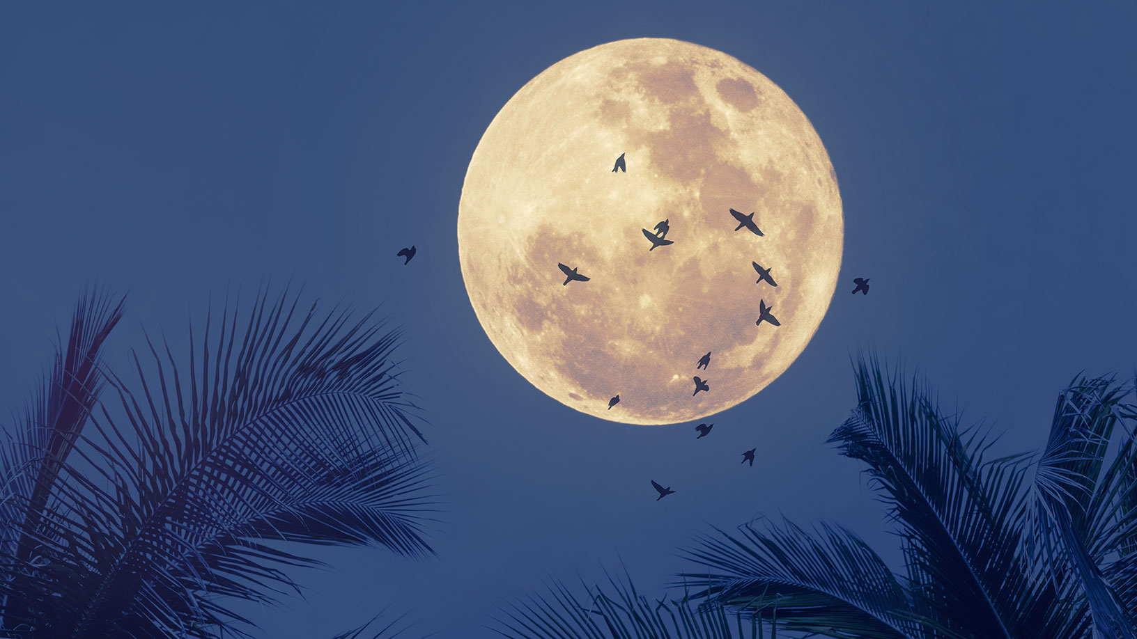 It´s Blue Moon, Baby!